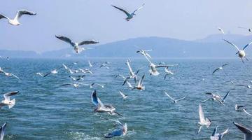 乘船游湖观鸟喂鸟,速来无锡围观!
