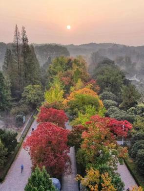 南京紫金山陆续上色 秋意渐浓