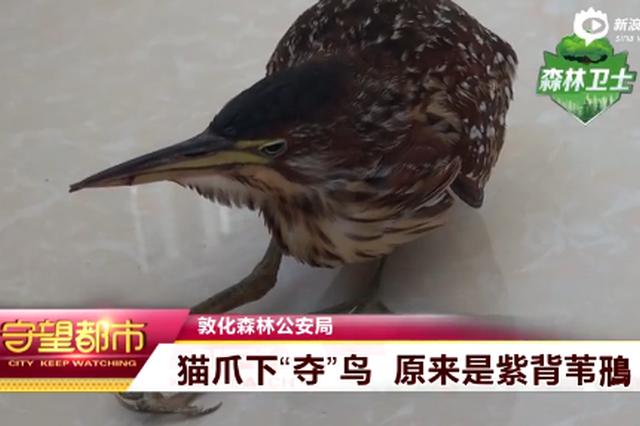 敦化森林公安:猫爪下夺鸟