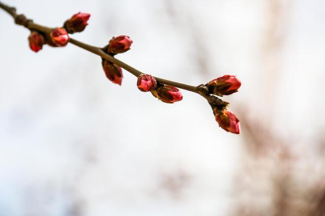 春天——萌动