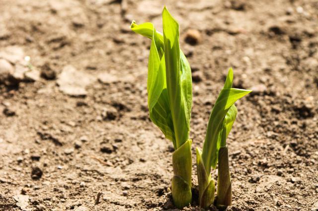 春天——绿意