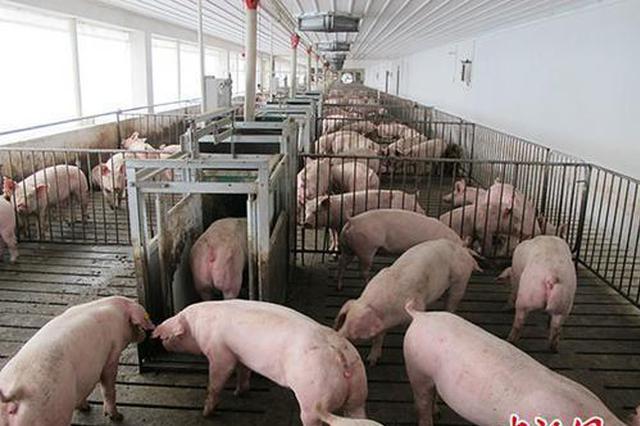 农业农村部:鼓励猪场开展非洲猪瘟自检