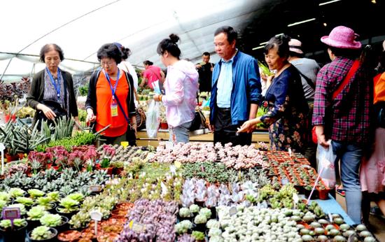 延吉市首届乡村文化旅游节启动仪式暨美丽乡村缤纷花卉博览会