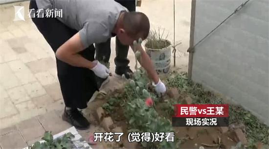 """男子种480株""""观赏植物"""" 民警一查把他拘了(三)"""