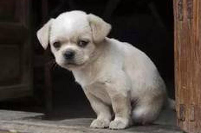 倡导文明养犬构建和谐社区 南昌为7000余只犬办证