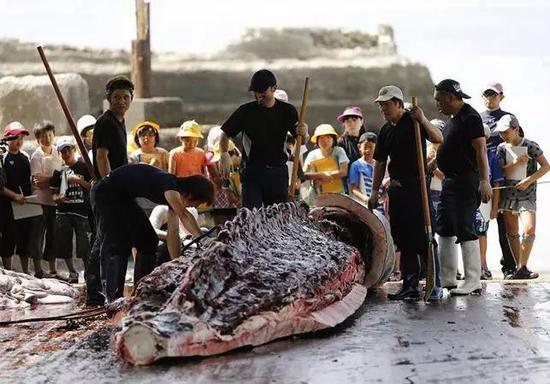 (图为结构小门生不都雅摩学习鲸鱼解剖 图源:不都雅察者网)