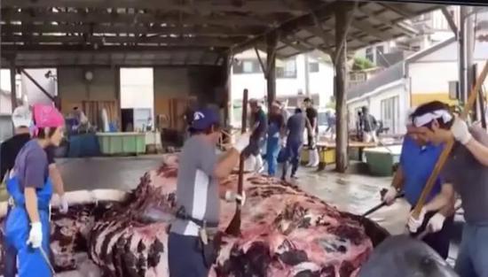 (图为鲸鱼被分割 图源:央视音信)