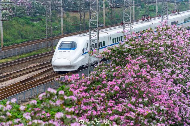 广西铁路沿线紫荆花?#21512;?#24320;放 动车上也可以赏花啦