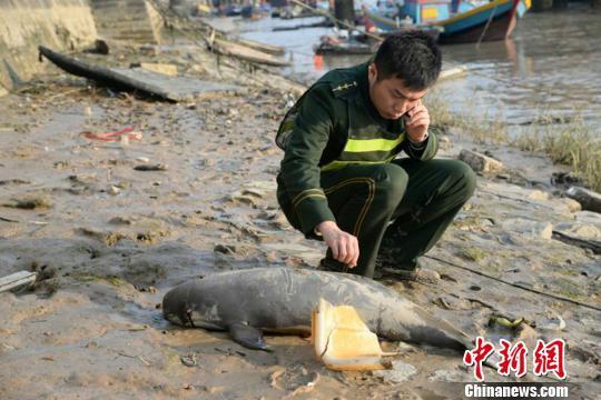 福建泉州海域一只江豚搁浅被发现时眼角流血