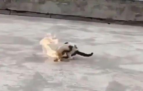 新京报:大学生虐杀流浪猫:完善立法补齐人性短板