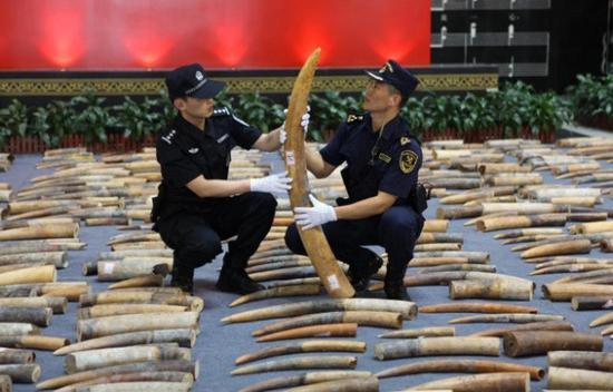 (今年3月缉私人员在清点特大象牙走私案中查获的象牙,图片来源:中国海关总署。)