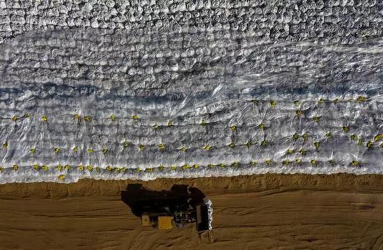 清理出来的黑色污染物被装进白色的大型防渗污泥袋集中存放,等待下一步处理(图源:新华社,11月13日无人机拍摄)