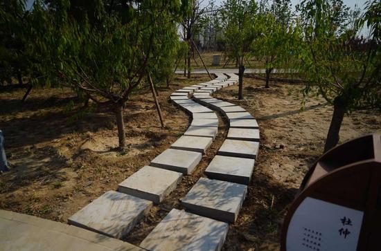 加速复工复产,北京朝阳今年将添8处公园