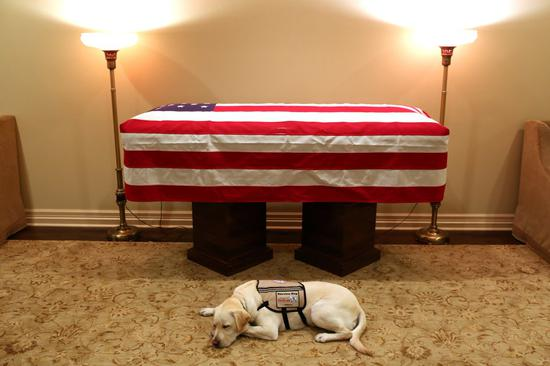 """老布什的服务犬""""萨利""""陪同灵柩抵达华盛顿,它将不息为其他伤兵服务图源:推特@jgm41"""