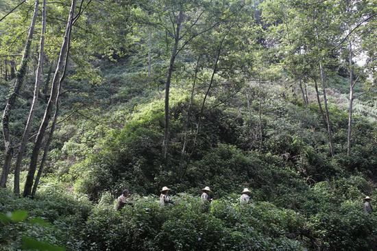 ▷王彬和他的同事在巡山护林途中