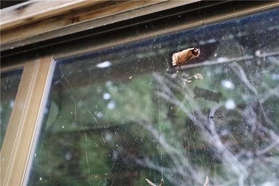 """""""乡下生活声援住宅""""窗外蛛网上粘着一片枯叶。"""