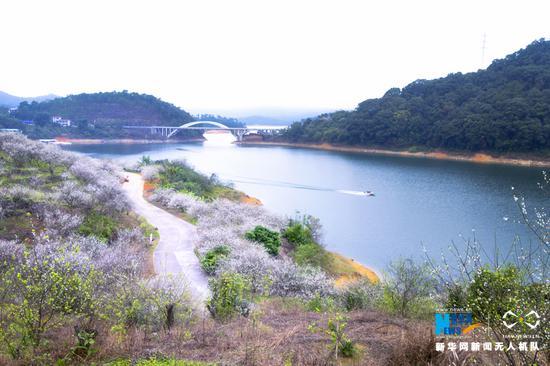广州流溪河国家森林公园。新华网发 (李汉晖 摄)