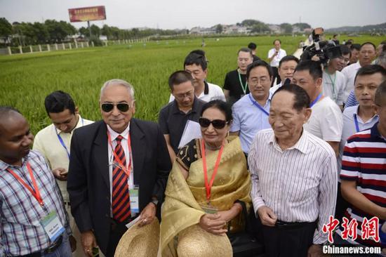 袁隆平与海外稻作专家在田间查看。