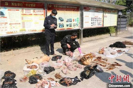 资料图:云南销毁一批野生动物制品及猎捕工具。王晶 摄