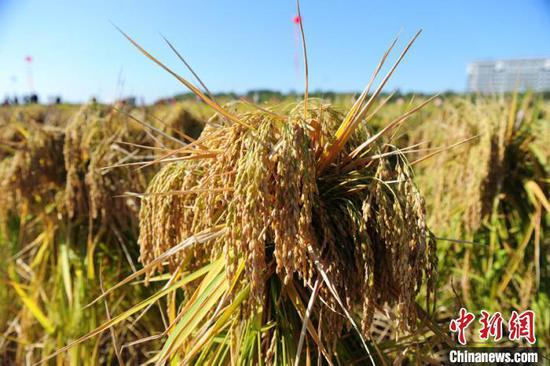 资料图:吉林省地处世界三大黑土区之一,承担着保障国家粮食安全的重要责任。 刘栋 摄