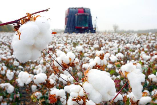 H&M越级碰瓷!但新疆棉花的这些知识你不得不知