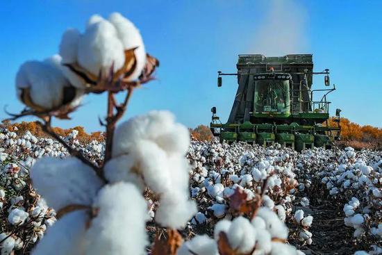 采棉机在新疆阿克苏地区沙雅县的一处棉田进行采收作业。来源:GJ