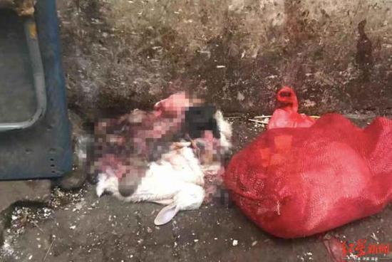 西区六街尽头遗弃的动物尸体和内脏