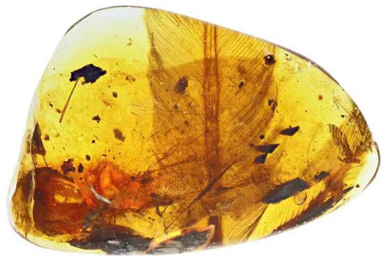 科学 鸟类 中外科学家琥珀在1亿年前发现了凶猛