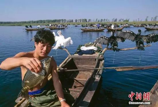 白洋淀,捕鱼。谢光辉摄图片来源:ctpphoto
