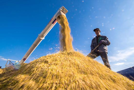 ↑在吉林省吉林市一拉溪镇,农民在运粮车上整理收割机收获的水稻(2018年9月17日摄)。新华社记者 许畅 摄