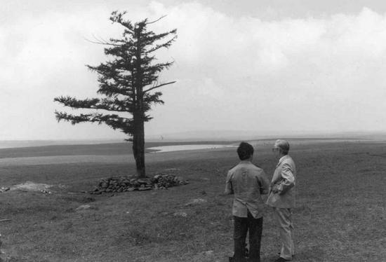 """↑专家在考察荒芜的塞罕坝时发现这棵年逾200岁的""""功勋树"""",成为""""塞罕坝能种树""""的标志(资料照片)。"""