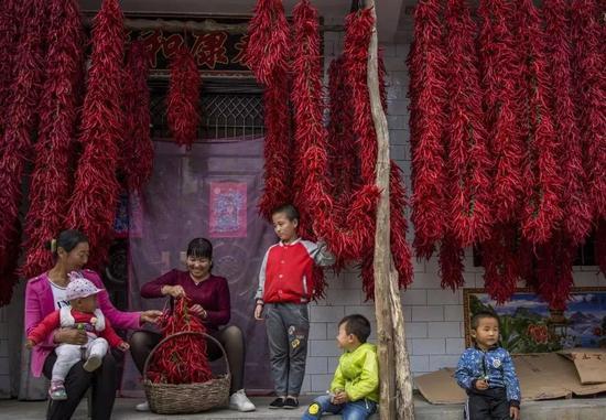 辣椒,陕西省陇县,摄影师@左雪兰/星球研究所