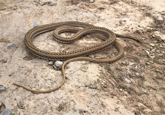 """""""世界内陆最低处""""发现蛇类新物种"""