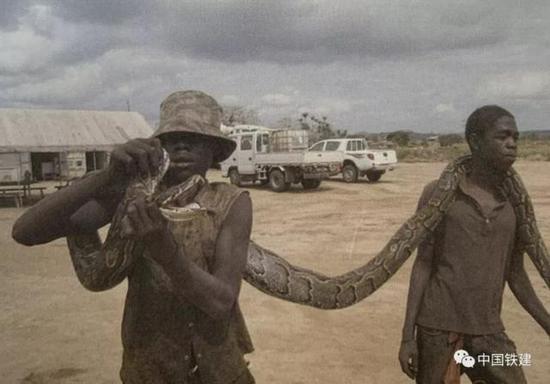 自幼培养的野外生存技能是本地员工与中方员工的最大区别,图为两名员工展示在工作中捕获的蟒蛇