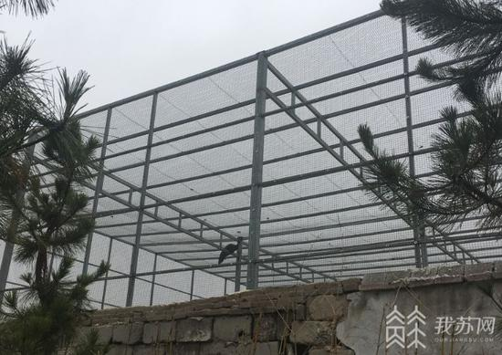 学校里的大型露天铁笼内豢养着孔雀等动物