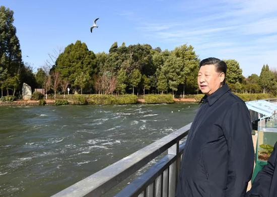 2020年1月习近平在云南昆明察看滇池保护治理情况。