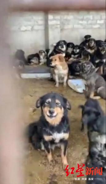 ▲爱狗人士发现的收狗点