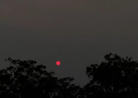 """受山火灾难影响,悉尼的太阳变成""""红日""""。受访者供图"""