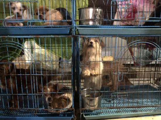 ▲援助站里的狗大众是土狗。骚作者不祥狠狠干记者 王翀鹏程 摄