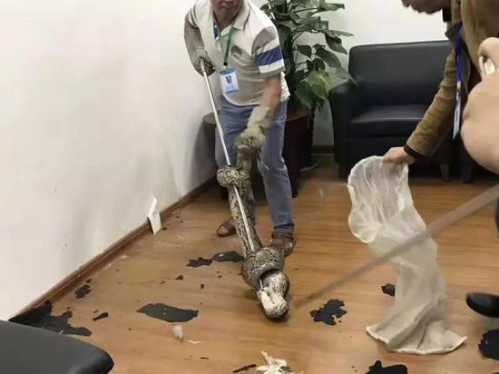 新闻资讯-免费yoqq银行员工正开会,天花板突然掉下大蟒蛇,视频慎点yoqq资源(5)