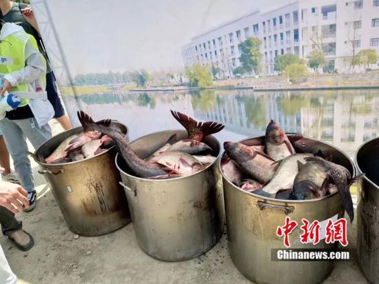 電子科大捕撈上千斤大魚。 電子科大供圖