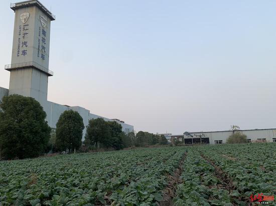 杭州青年莲花工厂空地已经种了菜