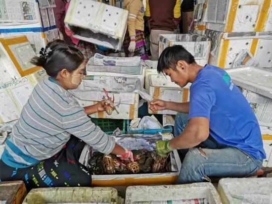 ▲1月3日,工作人员在云南省畹町水产品交易市场分拣来自缅甸的螃蟹。新华社记者姚兵摄