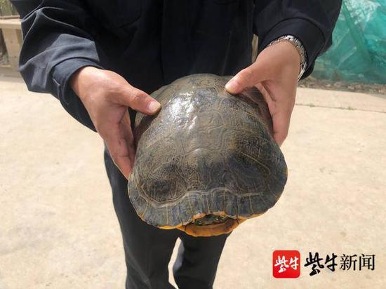 渔民家门口捡到地龟 主动联系渔政帮助放生