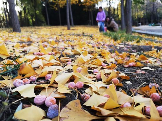 秋天到了看到这种果子千万别吃 已有多人中招