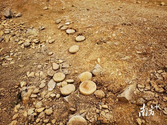 库底发现的圆形物件