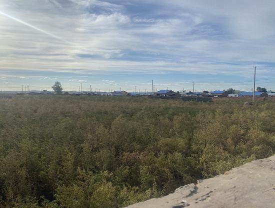 ▲韩杰在西乌珠尔苏木的老家已长满杂草