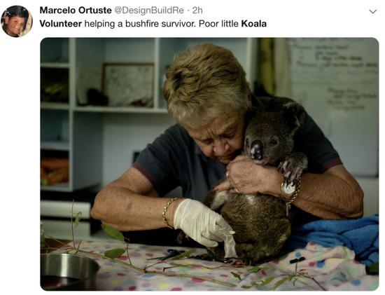 网友分享自愿者救治受伤的考拉。/ 推特截图