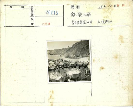张家口1939年11月,大境门外,休息的骆驼。