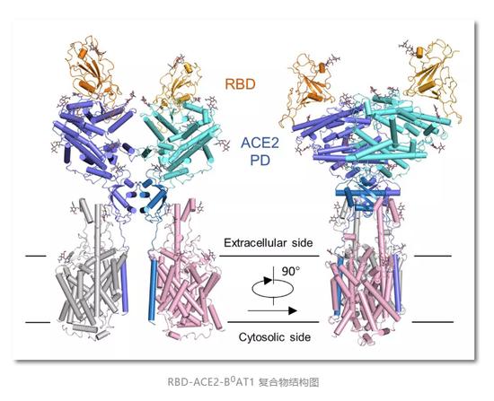 西湖大学研究团队获重大突破:深度解密新冠病毒侵染人体一刻